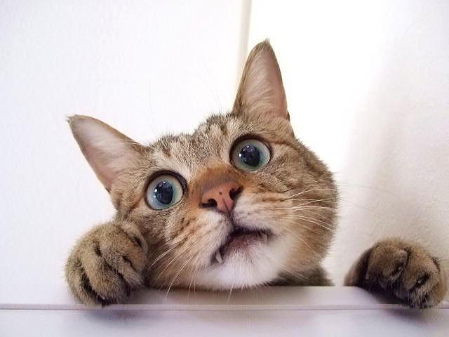 TOKIO長瀬智也と坂上忍が対立!? 猫派犬派を巡ってバトルを展開サムネイル画像
