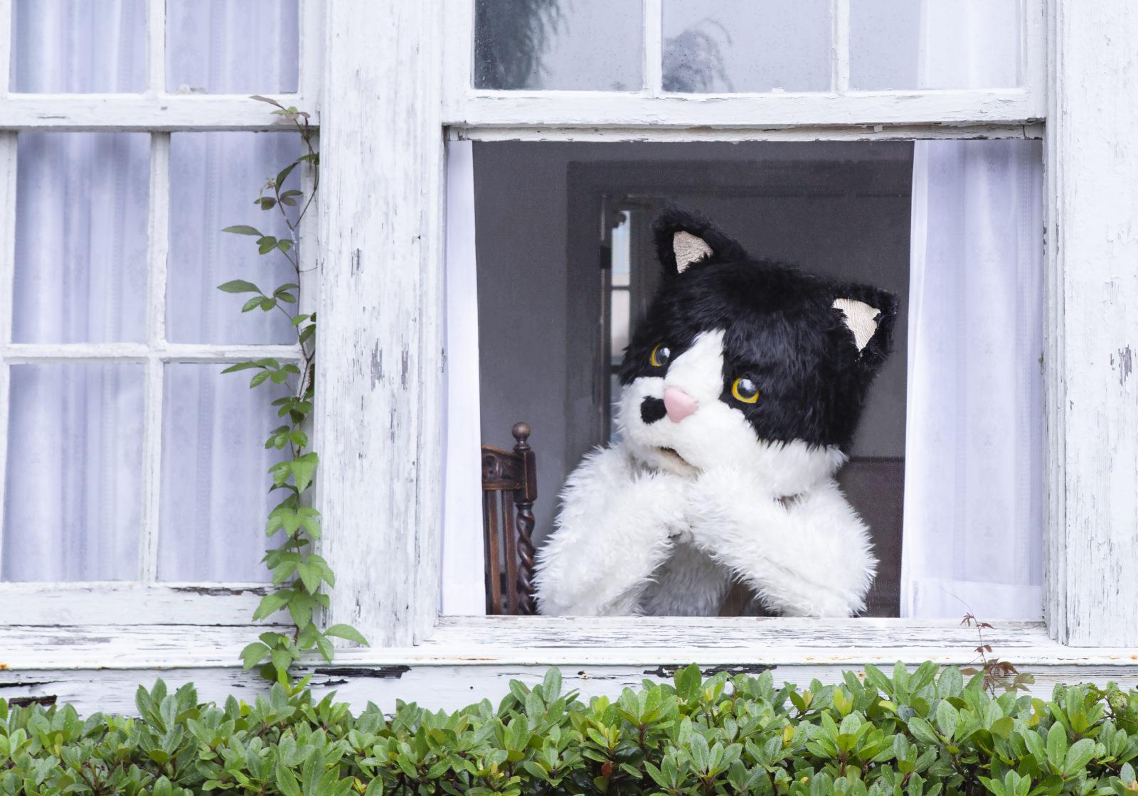 むぎ(猫)「窓辺の猫 feat. つじあやの」、TBS・MBS系全国ネット『プレバト!!』 8・9月度エンディングテーマに決定サムネイル画像